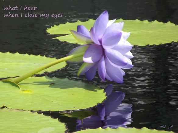 Haiga - Purple Lotus