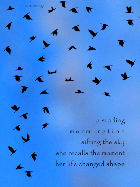 A Starling Murmuration-2.jpg