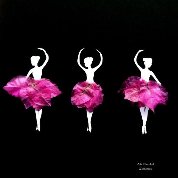 Bougainvillea_Ballerina.jpg
